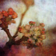 Pear Blossom Sunset 8930 Idp_2 Art Print