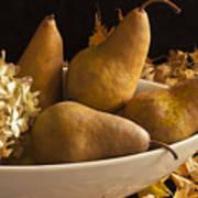 Pears And Hydrangea Still Life  Art Print