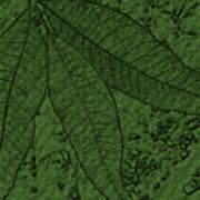 Pecan Tree Leaves Art Print