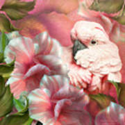 Peek A Boo Cockatoo Art Print