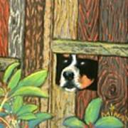 Peek-a-boo Fence Art Print