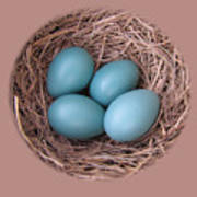 Peek Into A Robin's Nest Art Print