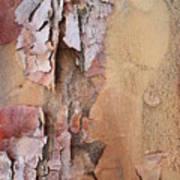 Peeling Bark Art Print