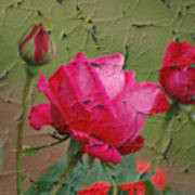 Peeling Rose Art Print