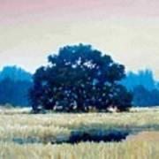 Peggys Oak Art Print