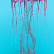 Pelagia Noctiluca Jellyfish Art Print