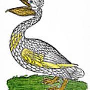 Pelican, 1560 Art Print