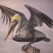 Pelican 2 Wings Spread Art Print
