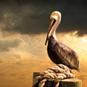 Pelican After A Storm Art Print