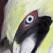 Pelican Closeup 1 Art Print