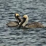 Pelican Couple Art Print