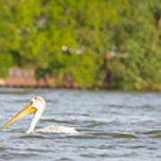 Pelican Drifting Along Art Print