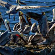 Pelican Fiesta Art Print