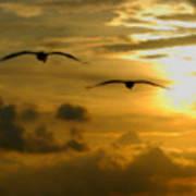 Pelican Flight Into The Clouds Art Print