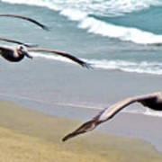 Pelican Fly-by Art Print