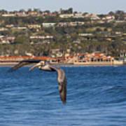 Pelican Flying Above The Pacific Ocean Art Print