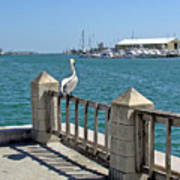 Pelican Gazing At Port Canaveral In Florida Art Print