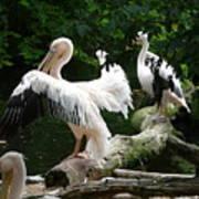 Pelican Hideaway Art Print
