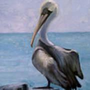Pelican IIi Art Print