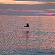 Pelican In Flight At Dawn Art Print