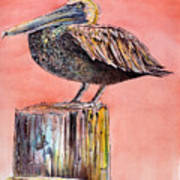 Pelican In Late Afternoon Art Print