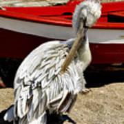 Pelican In Mykonos II Art Print