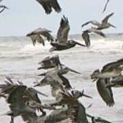 Pelican Migration  Art Print