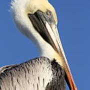 Pelican Mohawk Art Print