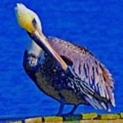 Pelican On Dock Looking Down Art Print