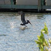 Pelican On The Waves Art Print