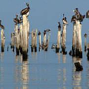 Pelican Pilings Art Print