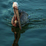Pelican Reflection Art Print