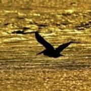 Pelican Silhouette - Golden Gulf Art Print