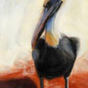 Pelican Study Art Print