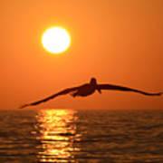 Pelican Sunset Art Print