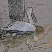 Pelican Swim IIi Color Pencil Art Print
