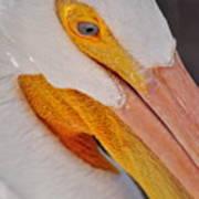 Pelican Twist Art Print