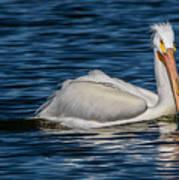 Pelican Wake Art Print