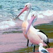 Pelicans At Pearl Beach 5.1 Art Print