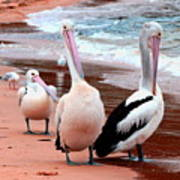 Pelicans At Pearl Beach 5.2 Art Print