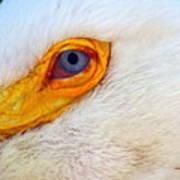 Pelican's Eye Art Print