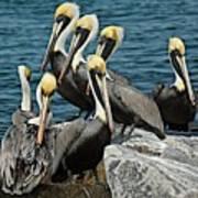 Pelicans Fort Pierce, Fl. Jetty Art Print