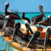 Pelicans On A Boat Art Print
