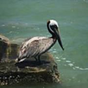 Pelican's Perch Art Print