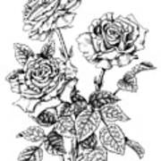 Pen And Ink Roses Art Print
