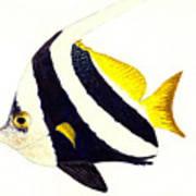 Pennant Fish Art Print