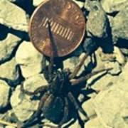 Penny Pinching Spider Art Print