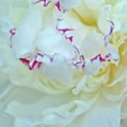 Peony Petals Art Print