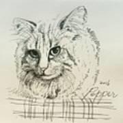 Pepper Art Print