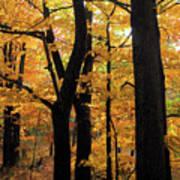 Pequaming Fall Art Print